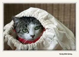 Bagai Membeli Kucing Dalam Karung