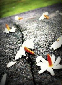 bunga untuk makam ibu