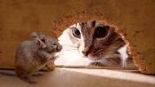 Puisi Kucing Beranak Tikus - Norman Adi Satria
