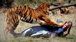 sajak harimau