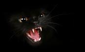 Puisi Kucing Hitam - joko Pinurbo