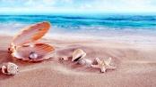 sea-shells-wallpapers-high-quality