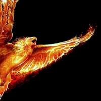 Burung Terbakar - Puisi WS Rendra
