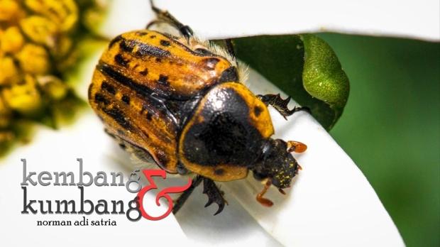 Kembang dan Kumbang - Puisi Norman Adi Satria